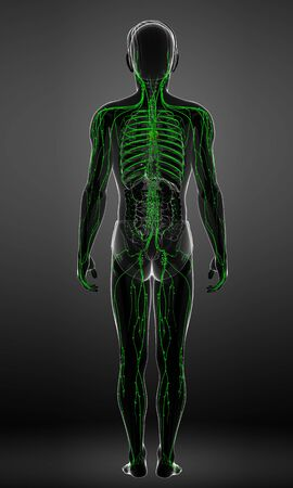lymph: Illustration of male body lymphatic system
