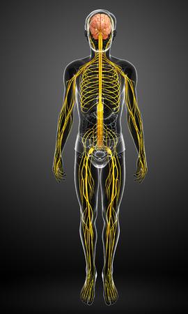 男性神経系作品のイラスト