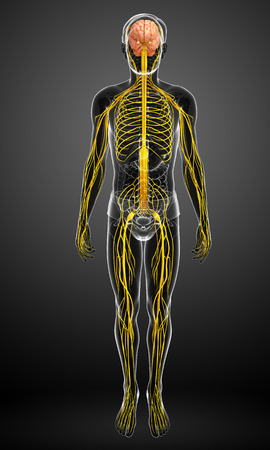 Illustration of Male nervous system artwork