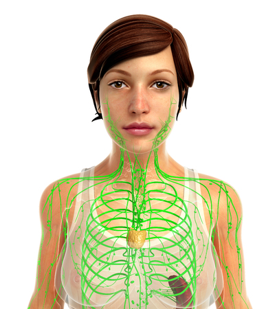 lymph: 3d rendered illustration of female lymphatic system