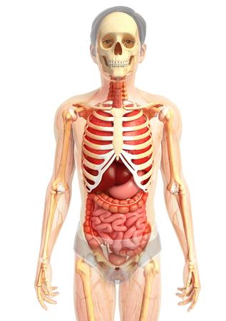 sistema digestivo: 3d rindi� la ilustraci�n de sistema digestivo
