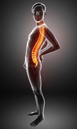 ortopedia: Ilustración 3D de sexo masculino Sintiendo el dolor de espalda Foto de archivo