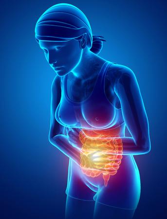 3d Illustration of Women Feeling the Stomachache