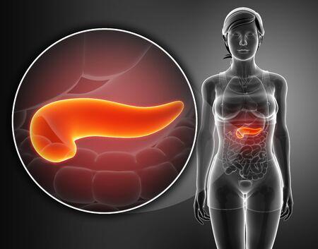 pancreas anatomy