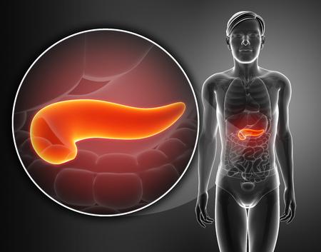 trzustka: pancreas anatomy