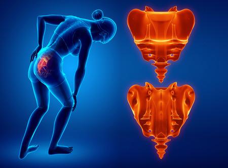 3d illustration of sacrum bone pain