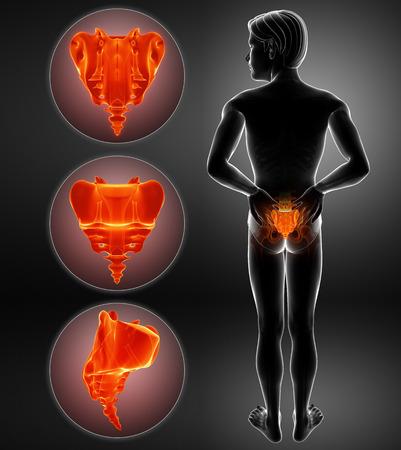 Illustration 3D de la douleur osseuse du sacrum Banque d'images - 73769782