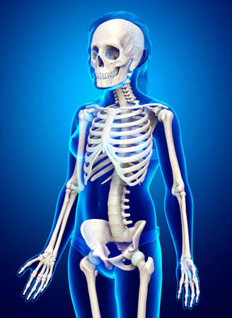 3d rendered, medically accurate illustration of a young girl skeleton system
