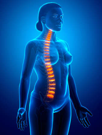 Backbone intervertebral disc anatomy