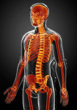 3d rendered, medically accurate illustration of a female skeleton system high lighted