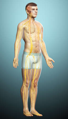 3d rendered medically accurate illustration of the interior brain anatomy