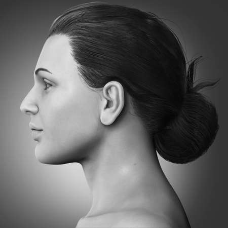 3d rendered medically accurate illustration of a female head anatomy 版權商用圖片