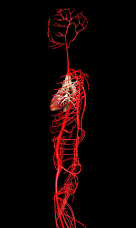 3d rendered medically accurate illustration of  arteries