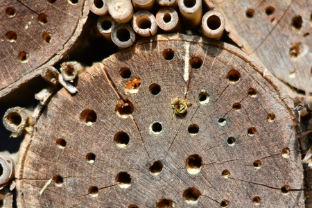 holey: holey wooden background, insect hotel for hibernating