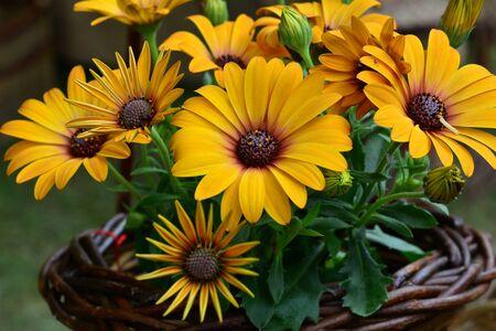 Beautiful orange Calendula flowers in a basket