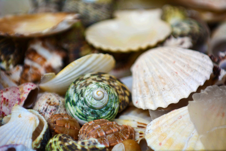 collection of various colorful seashells