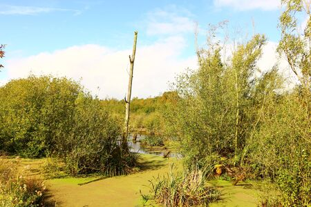 Water landscape in East Holland 版權商用圖片