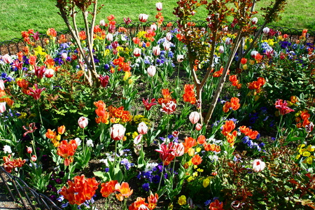 Colorful flowerbed in a park near Washington