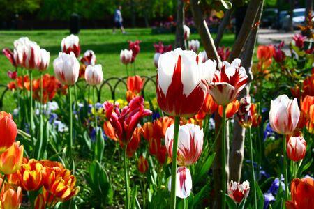 Spring flowers in a flowerbed near Washington Фото со стока