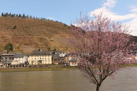 View of the Moselle and parts of Cochem Фото со стока