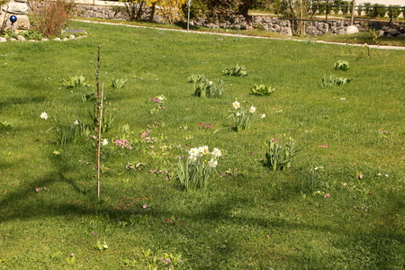 Spring flowers on a meadow in Ried am Wolfgangsee