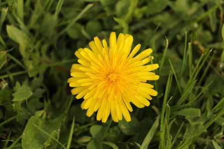 Close-up view of a dandelion flower Фото со стока