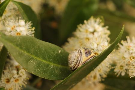 Snail shell on a bay leaf