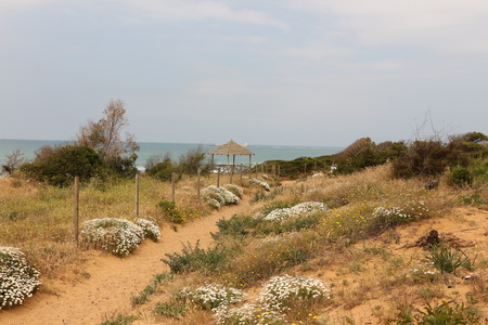 Blooming flowers on the Atlantic coast at Chiclana de la Frontera in Andalucia