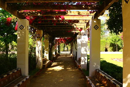 Blossom time at Maria Luisa Park in Seville