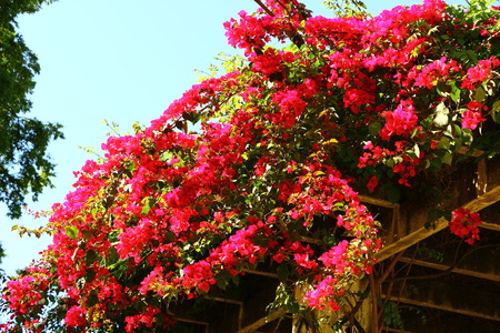 Blossom in the Maria Luisa Park in the spring in Seville