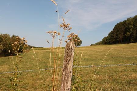 Mittsommer im Sauerland