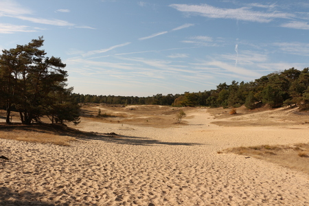 Dunes and pine forests in the Drunense Duinen National Park in the province of North Brabant in Holland 版權商用圖片