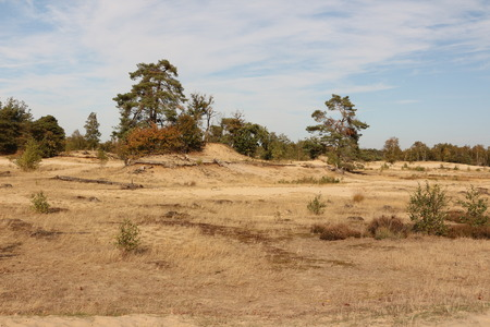Wide landscapes in the Drunense Duinen National Park in the province of North Brabant in Holland