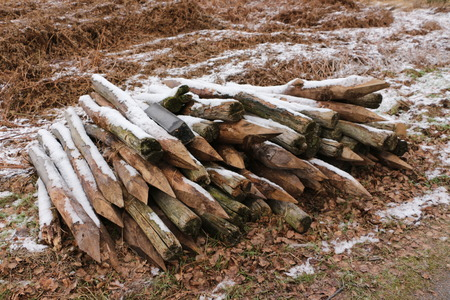 Fence posts in the national park D? Groote Peel in Holland
