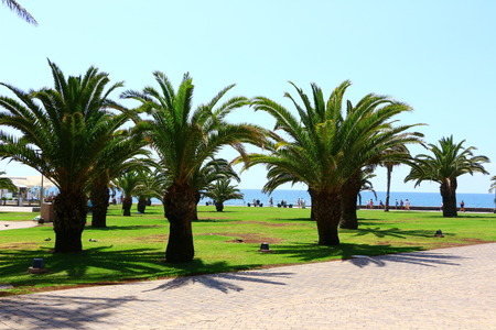 Palm trees at the beach promenade of Maspalomas on Gran Canaria