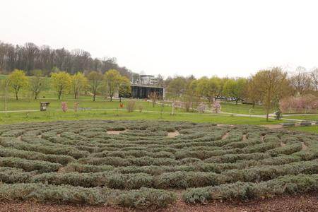 Lavender scrub in the spa park of Bad Rappenau