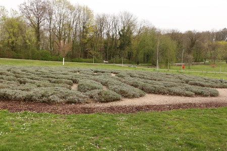 Lavender scrub in the spa park of Bad Rappenau Imagens