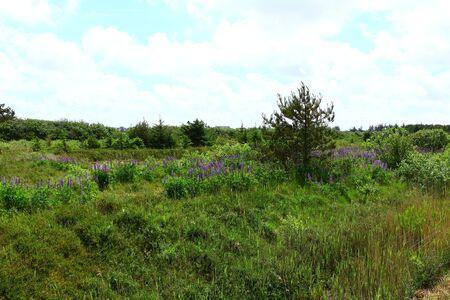 Nature landscape on the North Sea island F?hr