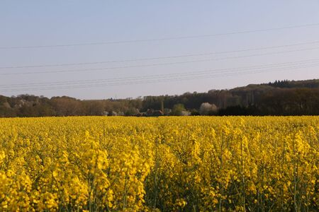 Flowering rapeseed field in the Ruhr valley near Menden in the Sauerland Standard-Bild