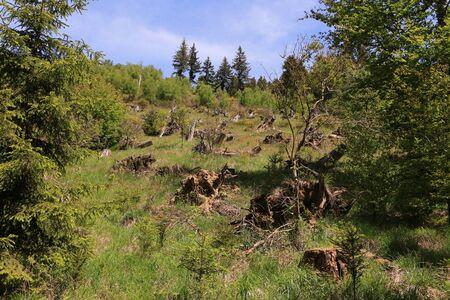 Natural landscape on the Rothaarsteig in the Hochsauerland