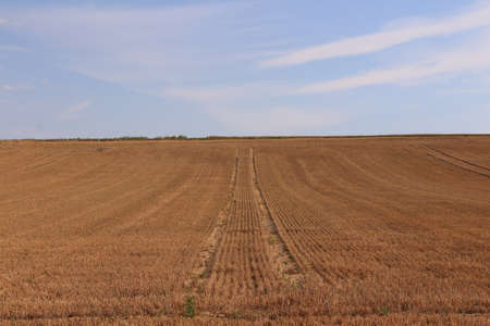 Harvested cornfield in summer near Frankfurt am Main Standard-Bild