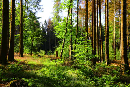 Morning mood in the early morning in a forest near Bad Marienberg