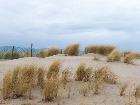 meer: dune