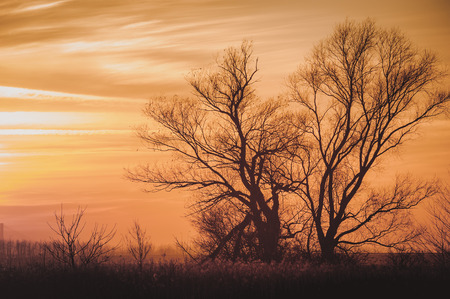 Leafless trees brunches on dramatic sky background Stock Photo