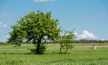 Beautiful spring rural landscape with meadows and trees. Poland. Suburban area. Zdjęcie Seryjne