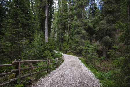 trees and dirt road in the mountains Archivio Fotografico