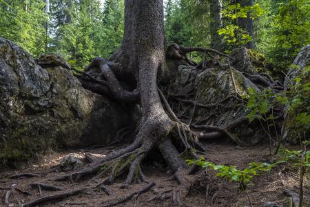 particular root