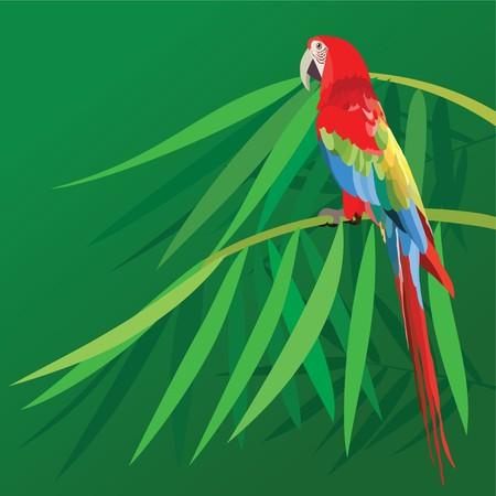 pappagallo colorato isolato in sfondo verde