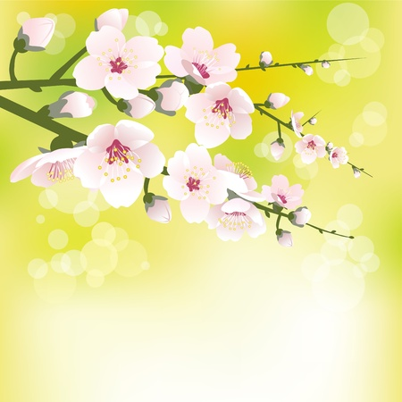 Abstract blossoming background in spring Stock Vector - 9107215