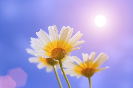 Shine flower